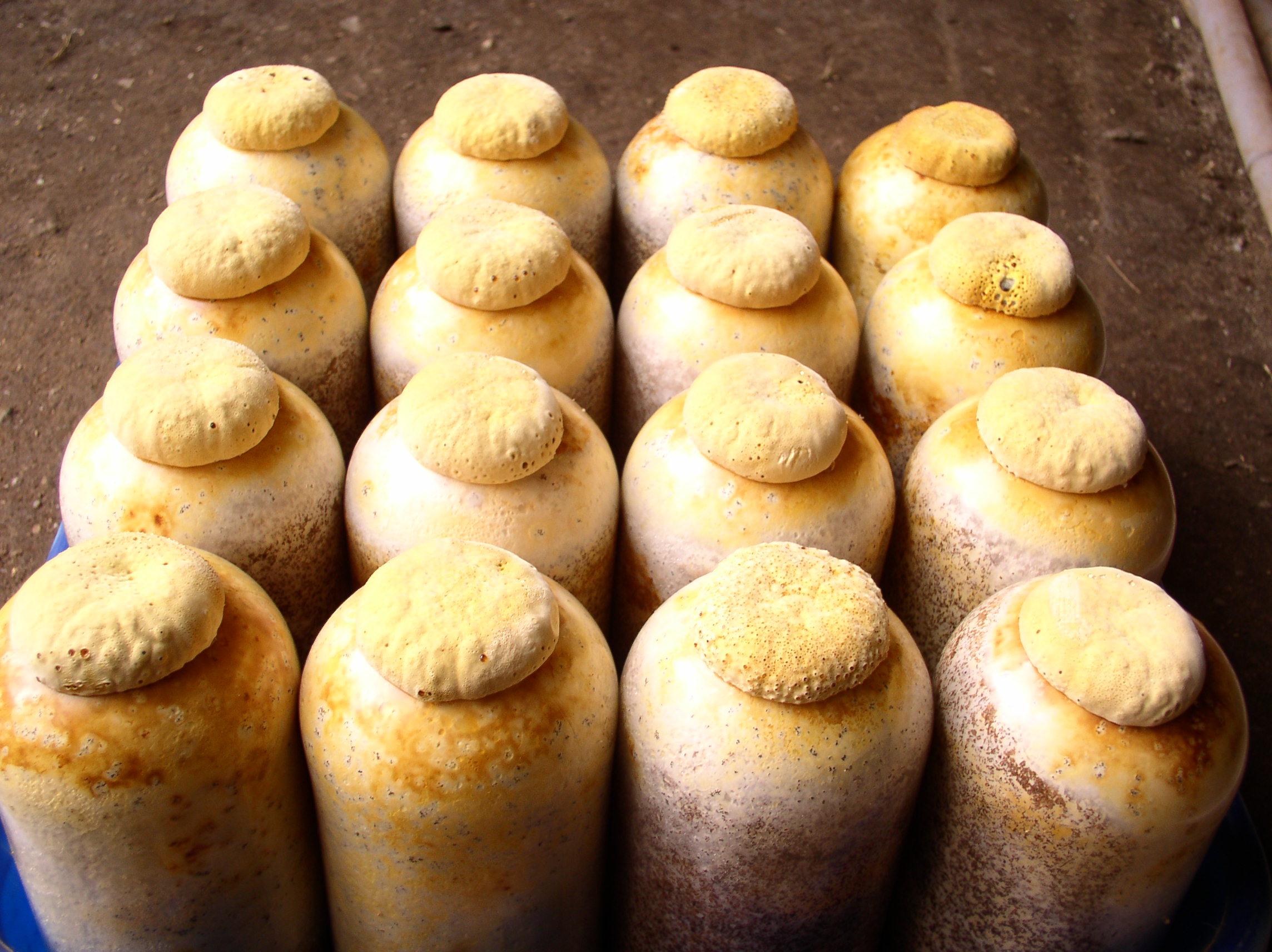 버섯사진13.JPG